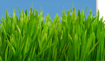 Grass along the bottom of the screen